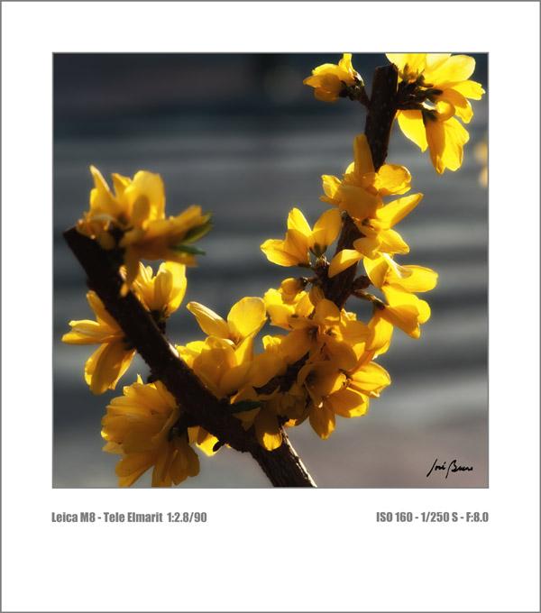 Una de la primavera-l1000445.jpg