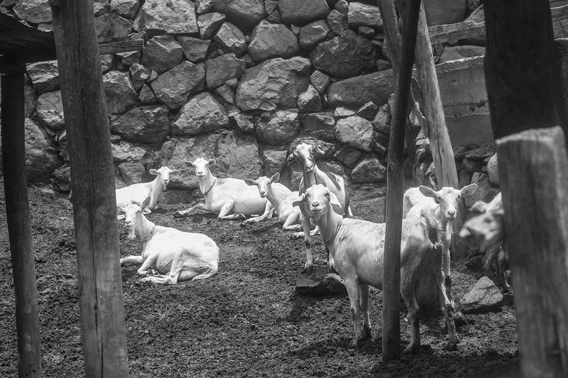 Animales en el campo-matu_l1101007.jpg