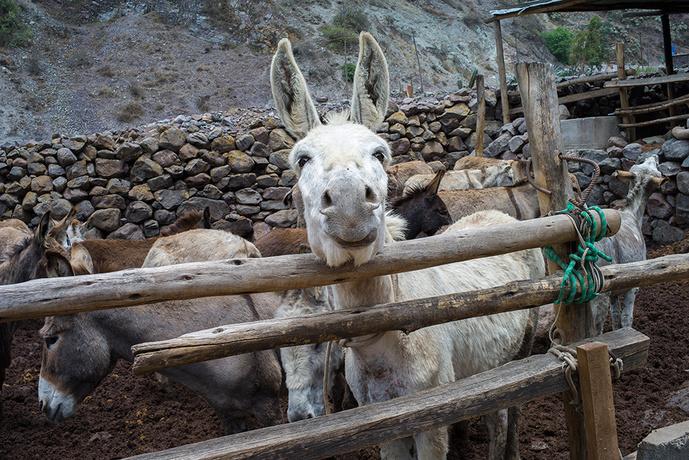 Animales en el campo-matu_l1091082.jpg