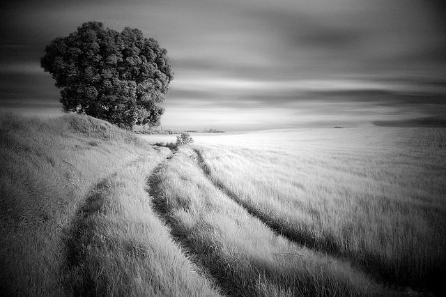 174 - The way ( El Camino)