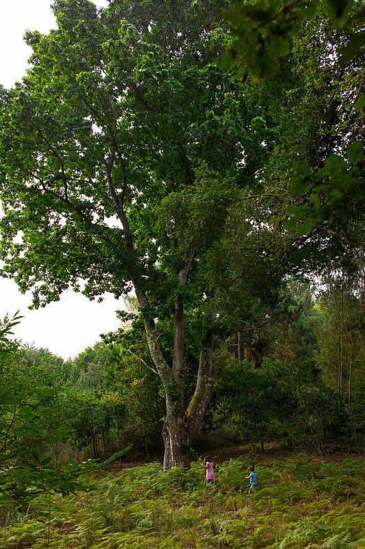 8171600145 9a4274cd15 c 1 - El árbol mágico