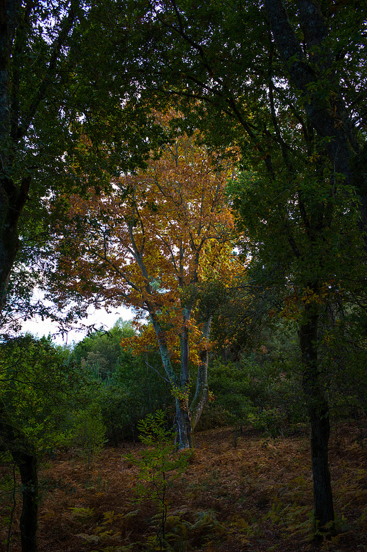 8173164172 0acda8d02e c 1 - El árbol mágico