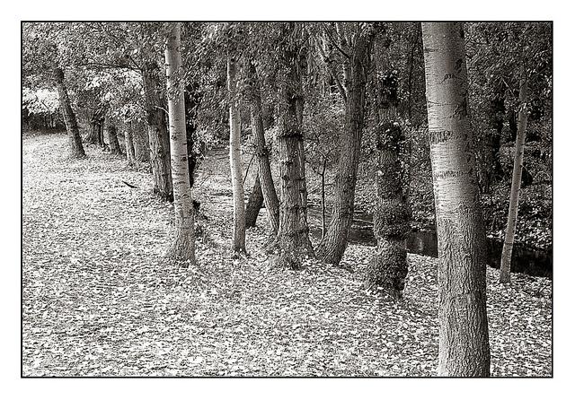 8220775579 68f21fb19e z 1 - Por el bosque en Sepia