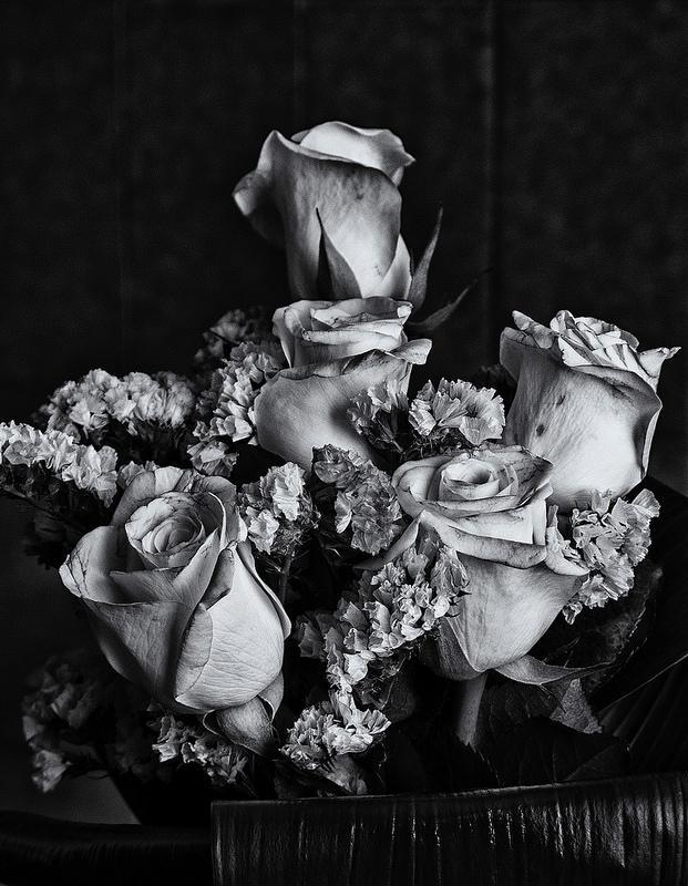 14126530113 40d6d8d09e c 1 - Rosas (dedicado a las mamás)