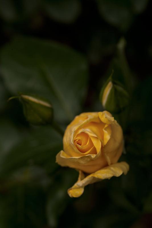 RB 8017 zpse0ec600d 1 - Os gustan las flores ?.