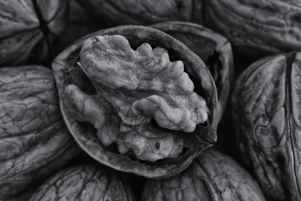 15724858181 711297b5a1 o 1 - Nueces (fruto del tiempo)
