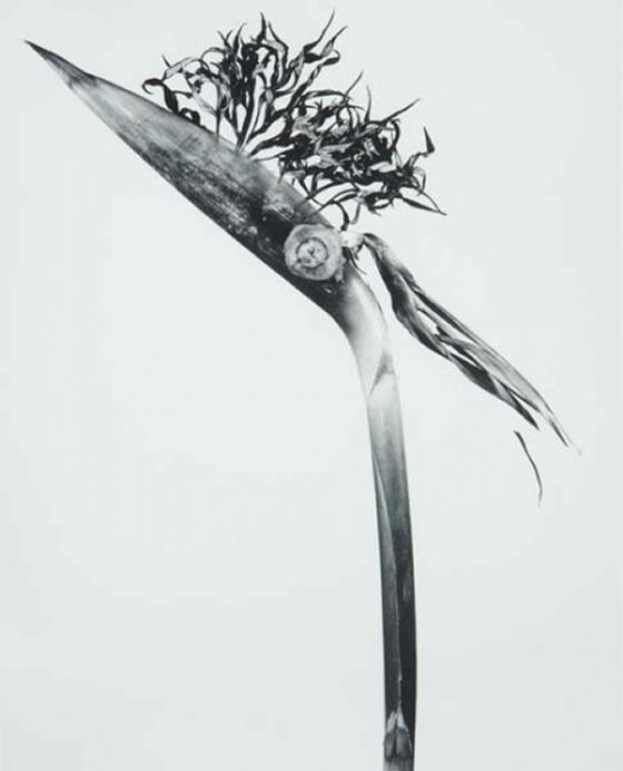herbariumjoanfontcuberta 1 - Flor Punkie.