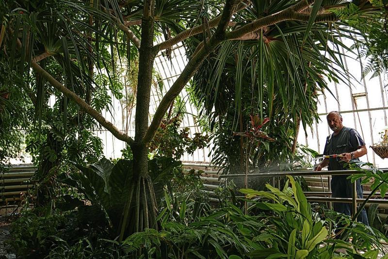 17470913214 b3f141c6c0 c 1 - Jardín botánico de Valencia