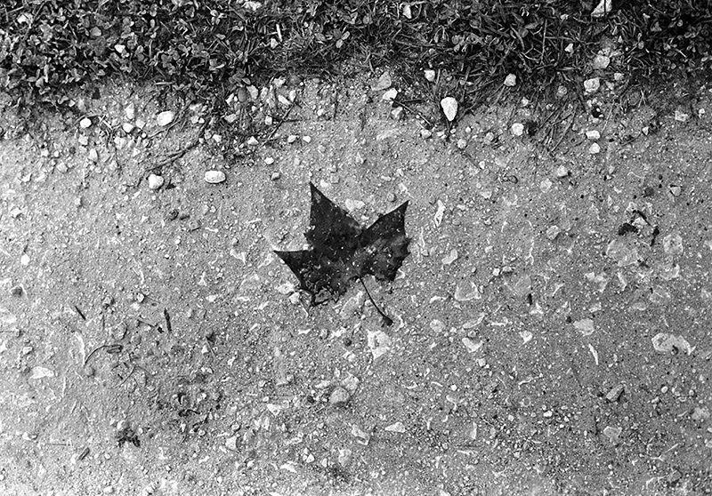 17499745168 0f04198f27 b 1 - Hojas de otoño.