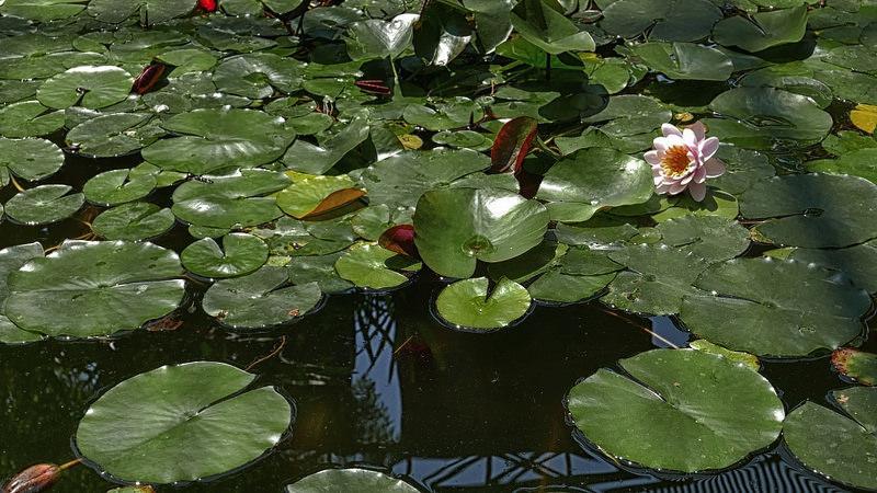 18093530265 00a332ea76 c 1 - Jardín botánico de Valencia