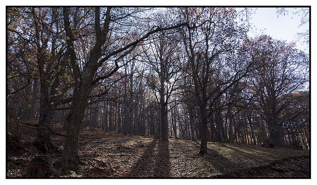 23893176307 00150cb6e3 z 1 - Sombras de otoño