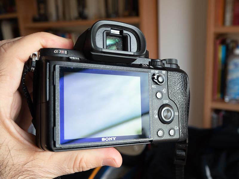 46131850345 b015134fd2 o 1 - Sony A7RII (1250 disparos) y Zeiss Loxia 50/2 casi a estrenar