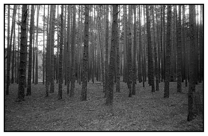 Bosque1 - Bosque animado
