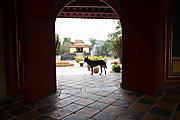 Vietnam_040219-15.jpg