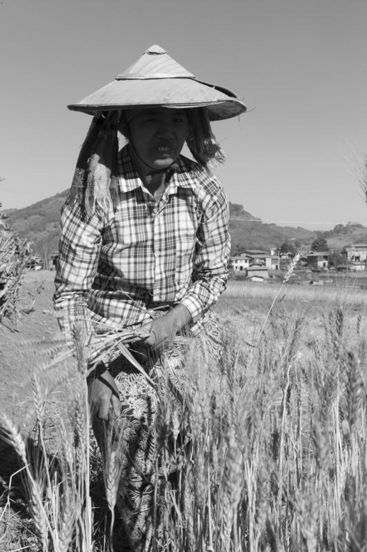 L1008853 - 16 dias por Birmania