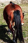 Horse_axe.jpg