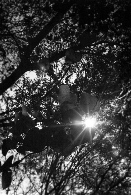 """Yosemite 03 - """"El bosque petrificado"""""""
