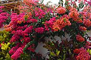 flores_L1130536.jpg