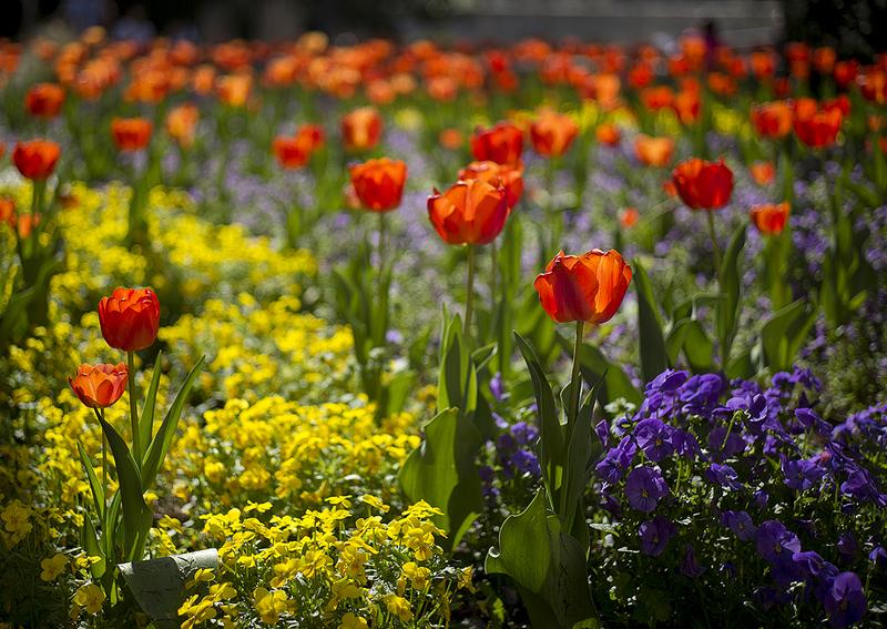 Y llegó la primavera.