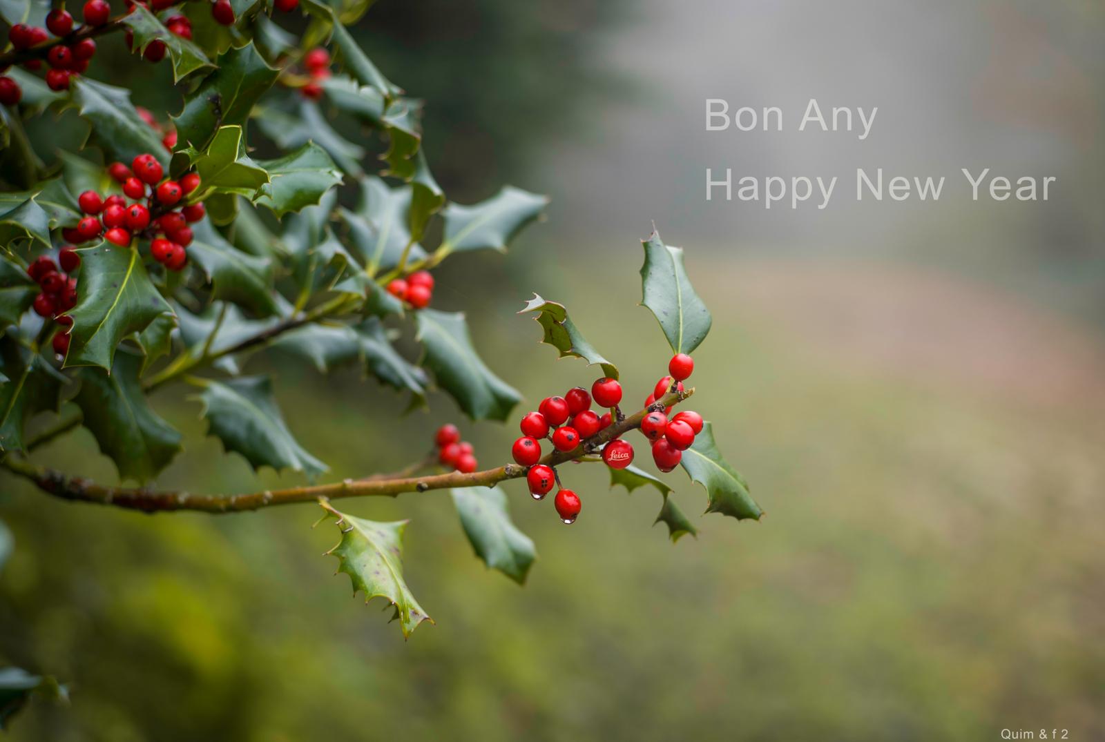 Bon any